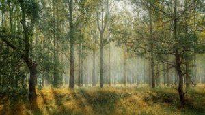Landschafts-Motiv